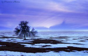 Lonely tree by dreamfall-girl