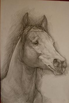 Horse head study November 2010 by howlinghorse