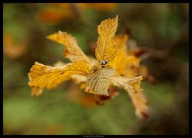 Bouquet of Autumn by Fall-Leaves-Club