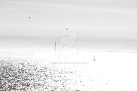 Bird with Golden Gate Bridge3-8-2014 3643 by MagicLightAdventures