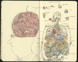 Artist anatomy by MattiasA