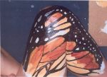 Butterfly Wing by katiedraws