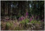 forest flowers I by corniger-aries