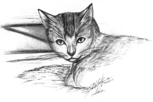 Pencil sketch of my cat by djmidori