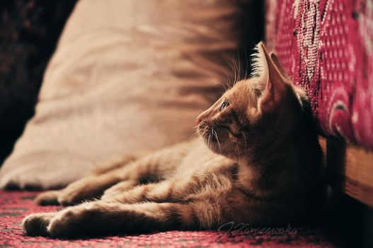 Ginger cat by Justysiak