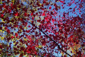 Colors Of Autumn by Lust0fADeeperPain