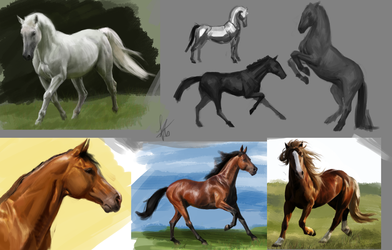 Horses study 1 by Snook-8