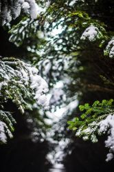 More snowy spring by atomkat