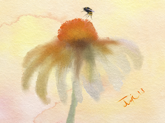 Coneflower with Bee by enug66
