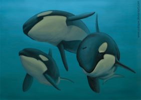 Orcas under water by YuliaPW
