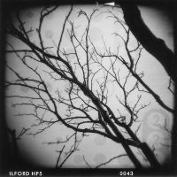 winter branches by lydiahansen
