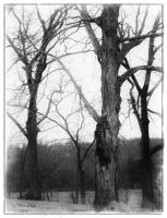 Black and white Tree by morbidmind6