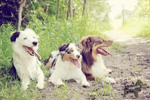 Play Day with Hero the Border Collie by Whimsydogstudio