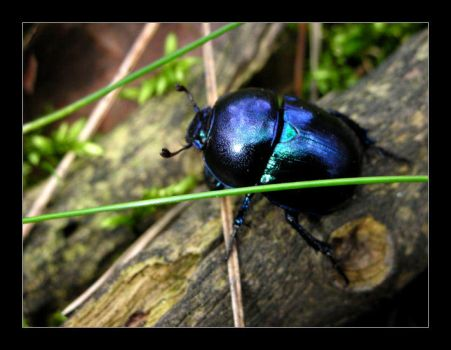 Just a Bettle by Alvia