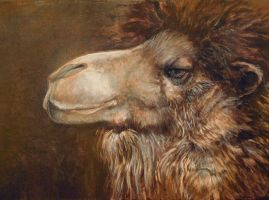 Camel Meditations by ursulav