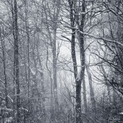 Trees in blizzard by Pajunen