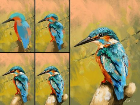 Kingfisher Colour Study-Process by BisBiswas