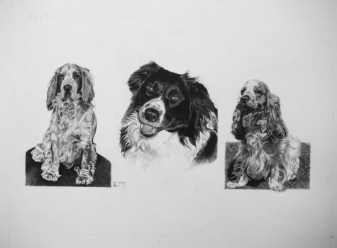 Dogs Portrait Commission by truthandlight78