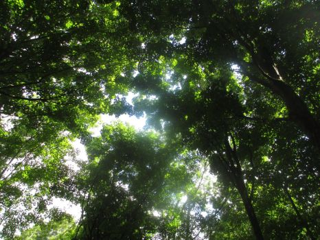 Forest Cieling by luka2299
