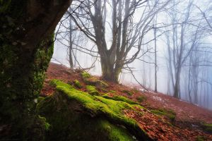 Forest Realm by FlorentCourty