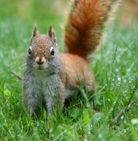 Wet Squirrel by tidesend