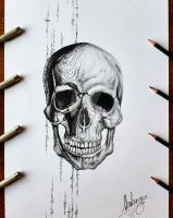 skull by almberger