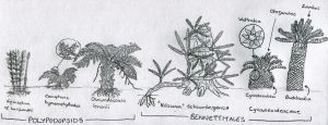 Sketch: Small plants of the morrison by Tomozaurus