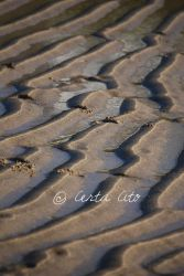 Waves by Certa-Cito