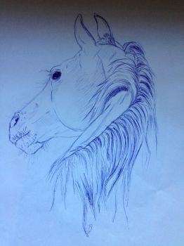 Horse Quick Sketch by 0DazedandConfused0