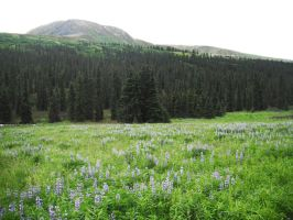 Blue Flowers Meadow 2 by prints-of-stock
