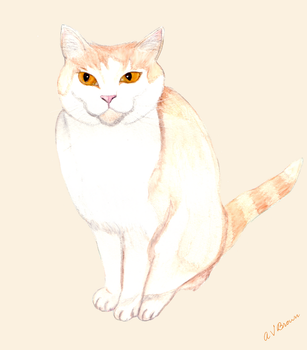 Edward the Cat by astateofconfusion