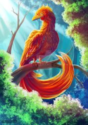 Phoenix, Fantastic beasts and where to find them by maryquiZe