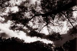 sfx trees and sky by electricjonny