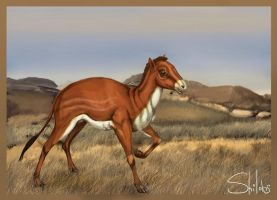 Hyracotherium by shilohs