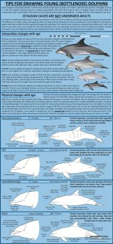Tips for drawing young (Bottlenose) dolphins by namu-the-orca