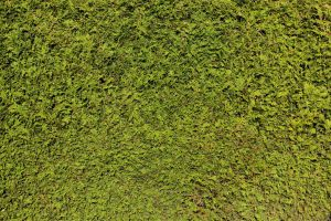 Hedge Texture - 2 by AGF81