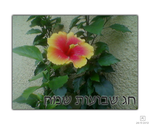 Hibiscus Shavuot Greeting by Kenliano