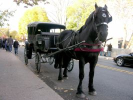 Horse and Carriage stock 6 by FairieGoodMother