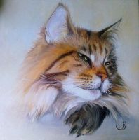 Maine Coon by Cancernick