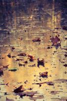 .: Golden Lake in Autumn :. by Frank-Beer