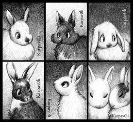 Rabbits by karpfinchen