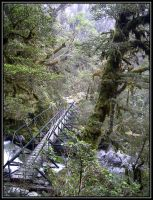 brigde in the enchanted forest by Macomona