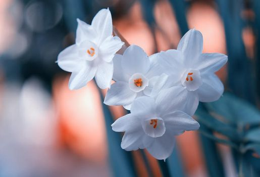 Narcissuses by Nataly1st