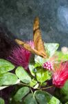 Moth on a Red Flower by dworld