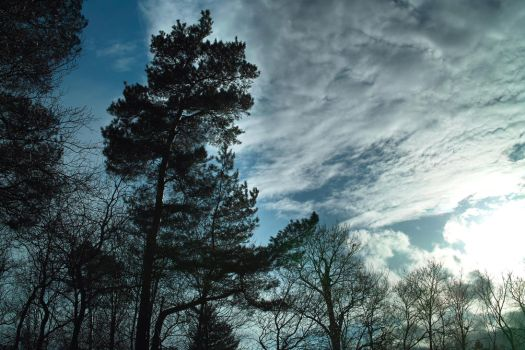 Trees, Clouds and Sun by zeropainter