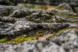 Moss on stone by HaleyGottardo