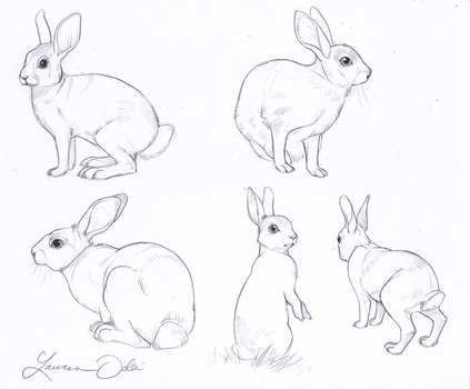 Wild Rabbit Study by DaffoDille