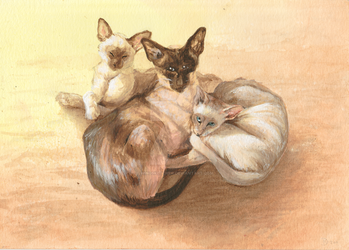 Siamese Cats by WingSketcher
