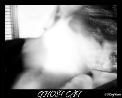 GHOST CAT by evilpokejuggalette
