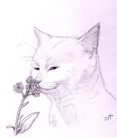 Cat and flower by Bastet-mrr